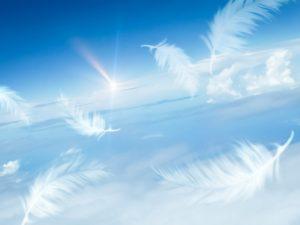 空を舞う天使の羽