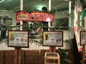 オニコウベスキー場の世界の昆虫展示館