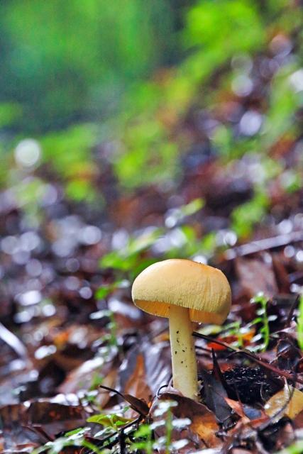 森の中のキノコ