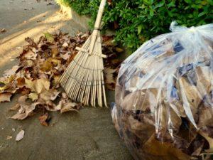 熊手で落ち葉掃除