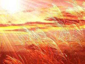 ススキ野原の夕焼け