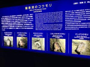 龍泉洞の5種類のコウモリ
